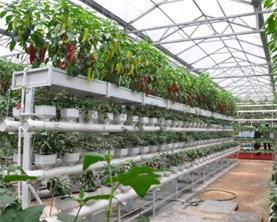 水肥一体化实施方案无土栽培水肥一体化项目