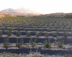 智能水肥一体机蓝莓基地